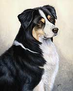 Australian Shepherd Dog Art Picture