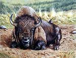 Wildlife Art Bison