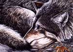 Wildlife Art Wolf