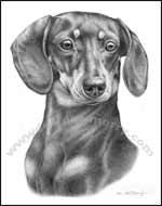 Smooth Dachshund Art