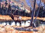 Wildlife Art Elk