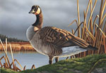Federal Duck Stamp Art Canada Goose 2010