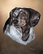 dachshund dog pet dapple portrait
