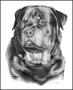 Rottweiler Portrait Dog Art Picture