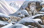 Wildlife Art Snow Leopards